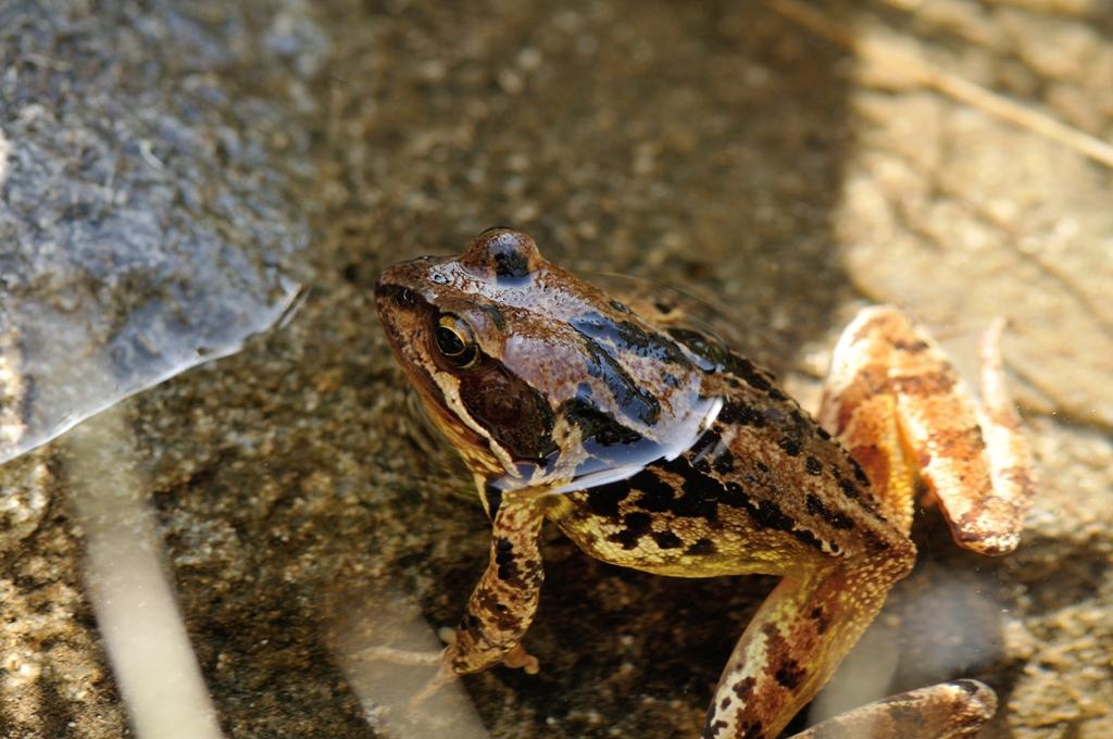 grenouille (4)