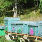 Différentes ruches