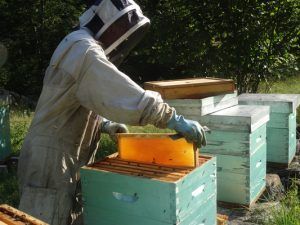 Les hausses gorgées de miel
